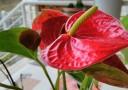 fiore hdr
